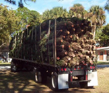 48' Flat Bed Christmas Tree Load