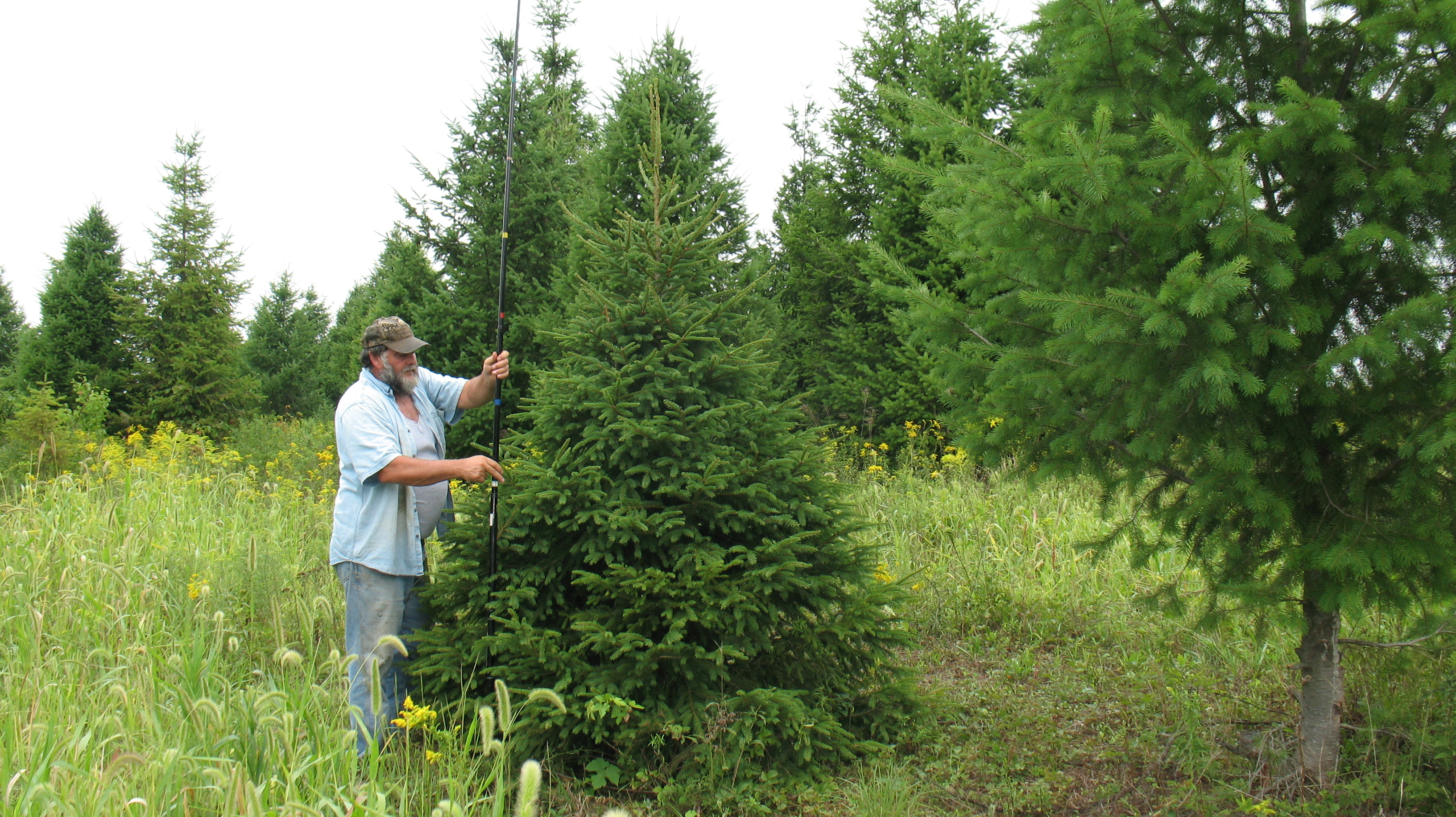 To your house measuring christmas trees north pole xmas trees