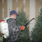 Spraying Christmas Tree Fire Retardant